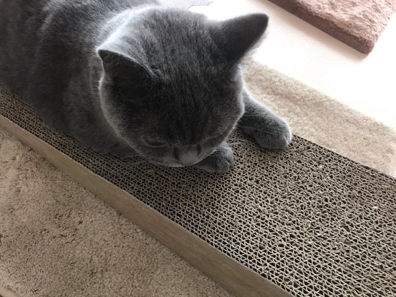 なんでネコは爪をガリガリするの?
