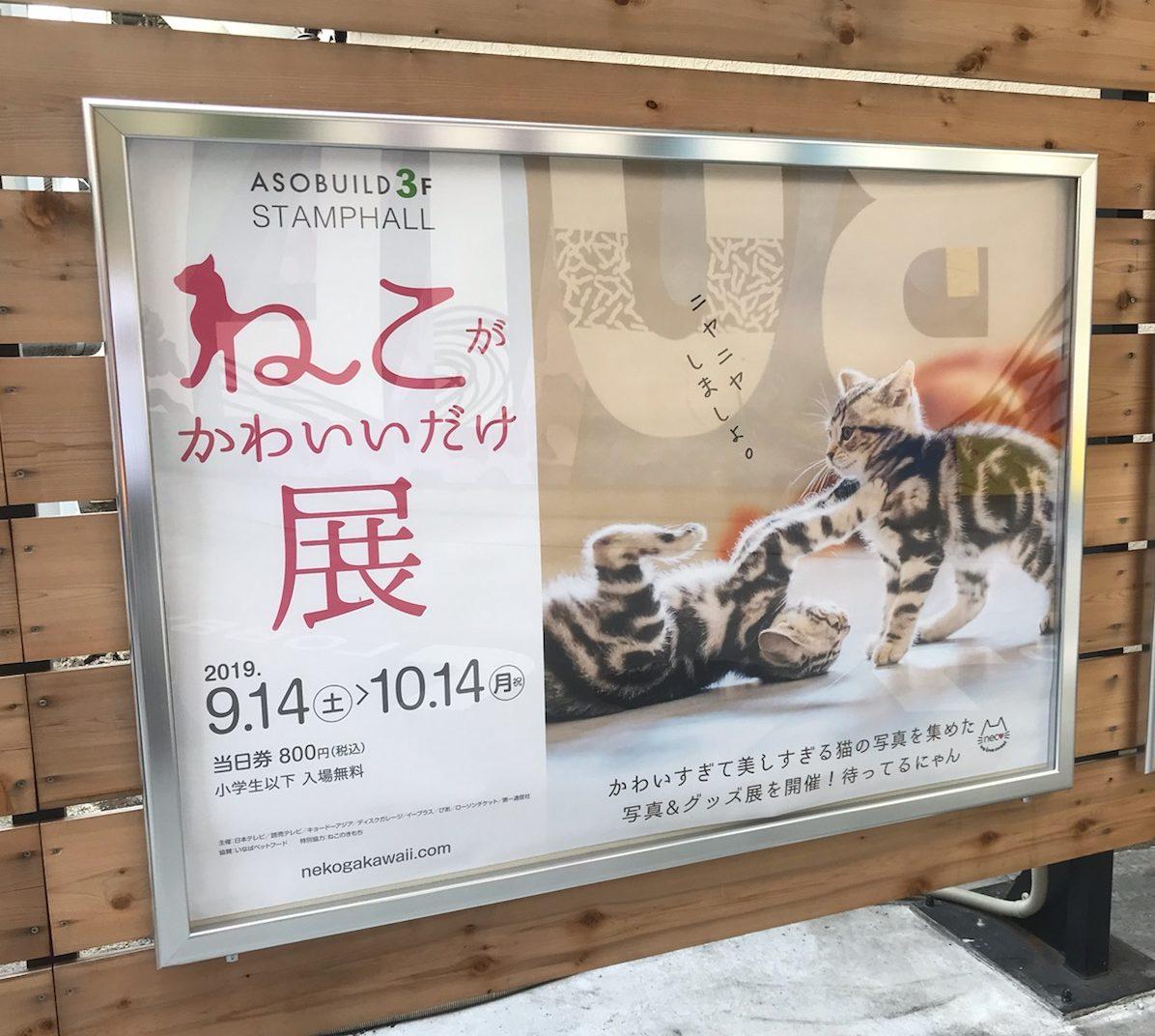 ねこがかわいいだけ展の横浜会場に行ってきました!会場の雰囲気やアソビルはどこにある?